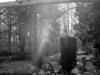 Morgenlicht im Garten