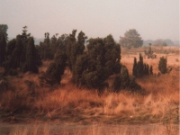 Heide, Foto: Hermann Moog