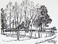 Herbstliche Bäume bei Dülmen,15.10.70