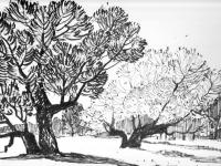 Alte Bäume bei Flüren, 24.10.1970