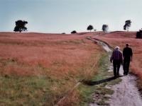 Hermann Moog (Neffe des Künstlers) in der Heide
