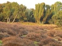 Westruper Heide 2012